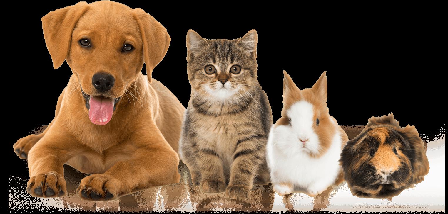 Jasa Pembuatan Website Petshop / Dokter Hewan / Klinik Hewan